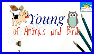 Vocabulary - Young of Animals and Birds