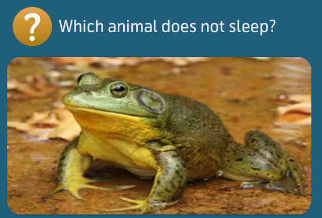 Which animal does not sleep?