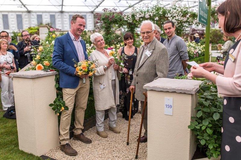 Judith Dench y David Austin presentando el rosal inglés 'Dame Judi Dench' en Chelsea Flower Show