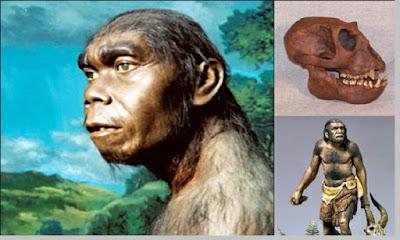 Meganthropus Paleojavanicus - pustakapengetahuan.com
