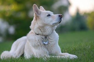 Köpek Resimleri En Güzel Resimler, Fotoğraflar, Resimleri  Köpek Yavrusu Fotoğraflar, Resimler Ve Görseller En Güzel Köpek Resimleri Evcil Hayvan Bloğu En Sevimli Köpek Fotoğrafı Yarışmasına Katılan Harika Köpekler Yavru Köpek Resimleri Sadece En Tatlı Köpekler Dünyanın En Küçük Köpek Cinsleri