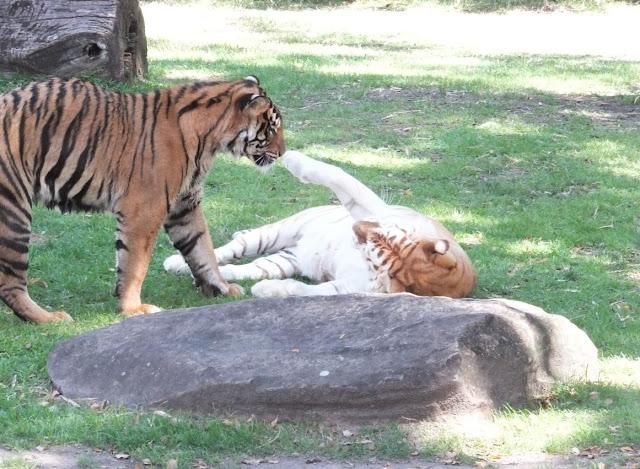 Tiger Island Dream World