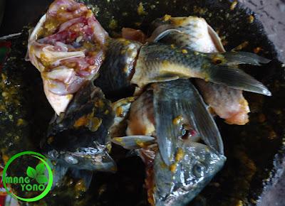FOTO : Melumuri ikan dengan bumbu
