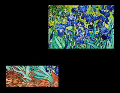 Irises in flowerbed on black canvas