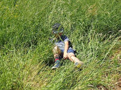 grzyby 2017, grzyby w czerwcu, grzyby na Orawie, przygotowanie do wakacji