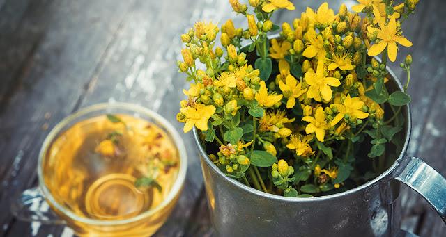 Sarı kantaron nedir? sarı kantaron otu yağı faydaları nelerdir? kantaron ne işe yarar? sarı kantaron çayı nasıl hazırlanır? yararları nedir? sarı kantaron nerede satılır? sarı kantoron hakkında bilgiler..