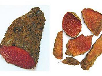 Củ Nâu - Dioscorea cirrhosa - Nguyên liệu làm thuốc Chữa Đi Lỏng-Đau Bụng