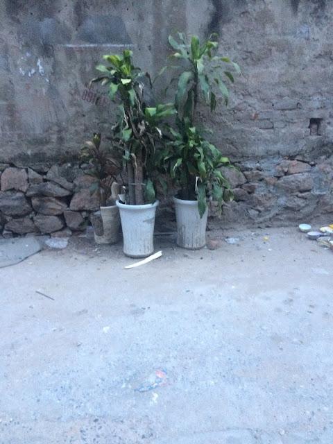 Thu mua chậu cây cảnh đã sử dụng