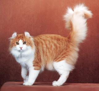 tips merawat kucing berbulu panjang
