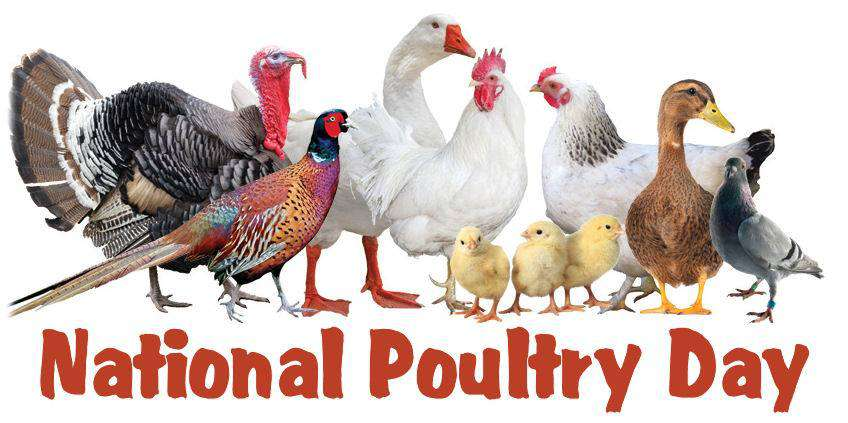 National Poultry Day Wishes Beautiful Image
