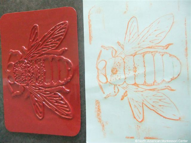 NAMC montessori preschool classroom studying honeybees bee crayon rubbing