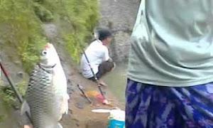 Jenis Umpan Mancing Ikan Tawes di Sungai