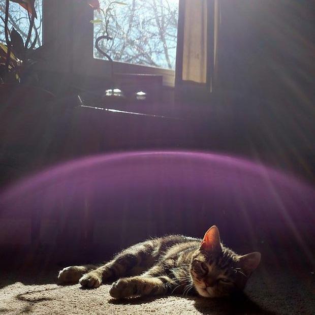 15 bức ảnh chứng minh mèo và nắng là cặp đôi sinh ra vì nhau