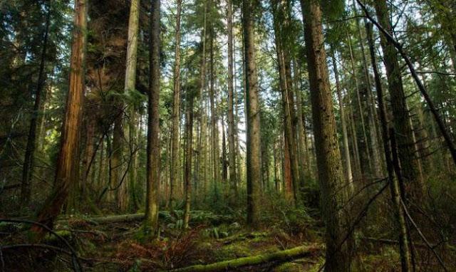 Φύτεψε 5 εκατομμύρια δέντρα σε όλη του τη ζωή!