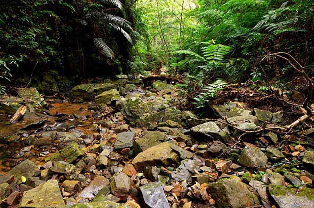 rocks in streambed,wide angle view,ferns
