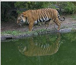 Meigiana Blog Persebaran Flora Dan Fauna Di Dunia
