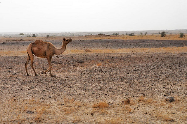 Desert Safari in India