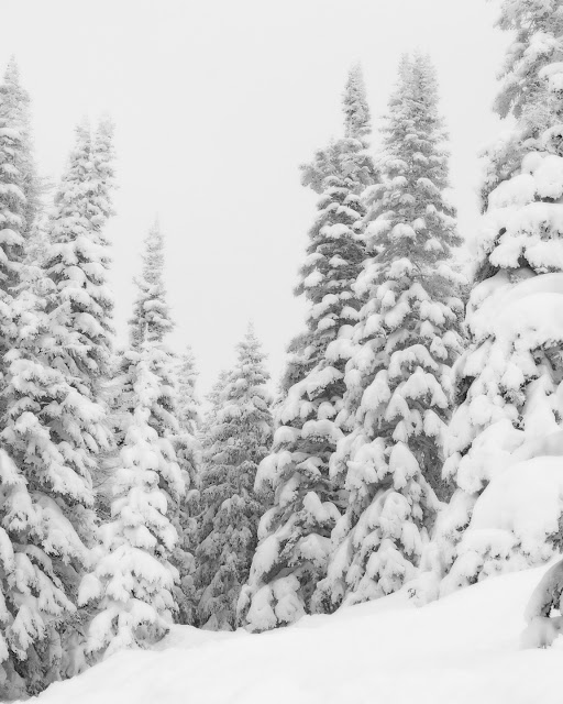 Winter photograph of snow covered trees in the Colorado Mountains