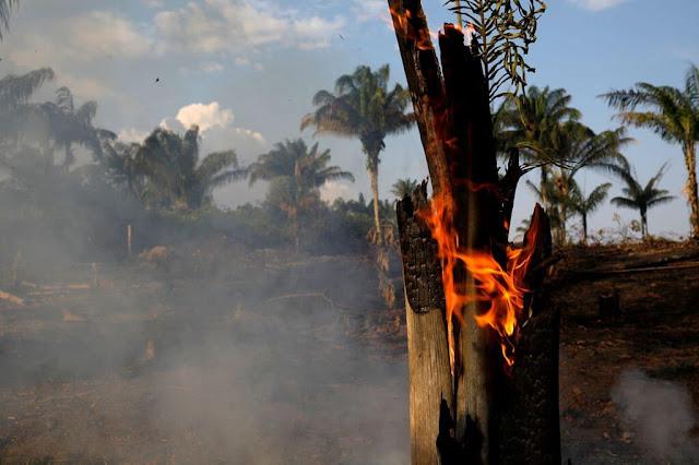 Cháy rừng mưa nhiệt đới Amazon (Brazil) là một vấn đề đáng lo ngại trong những năm qua. Trung tâm nghiên cứu không gian (INPE) của Brazil đã ghi nhận 9.000 vụ cháy trong năm nay. Số lượng vụ cháy xảy ra ngày một cao dù mùa cháy mới bắt đầu (thường diễn ra từ tháng 8-10). Hôm 19/8, một trận cúp điện kéo dài khoảng một giờ đã xảy ra ở Sao Paulo (Brazil). Nguyên nhân do ảnh hưởng từ vụ cháy rừng ở bang Amazonas và Rondonia, những nơi cách đó gần 3.000 km.