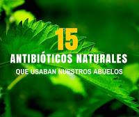 15 Antibioticos naturales