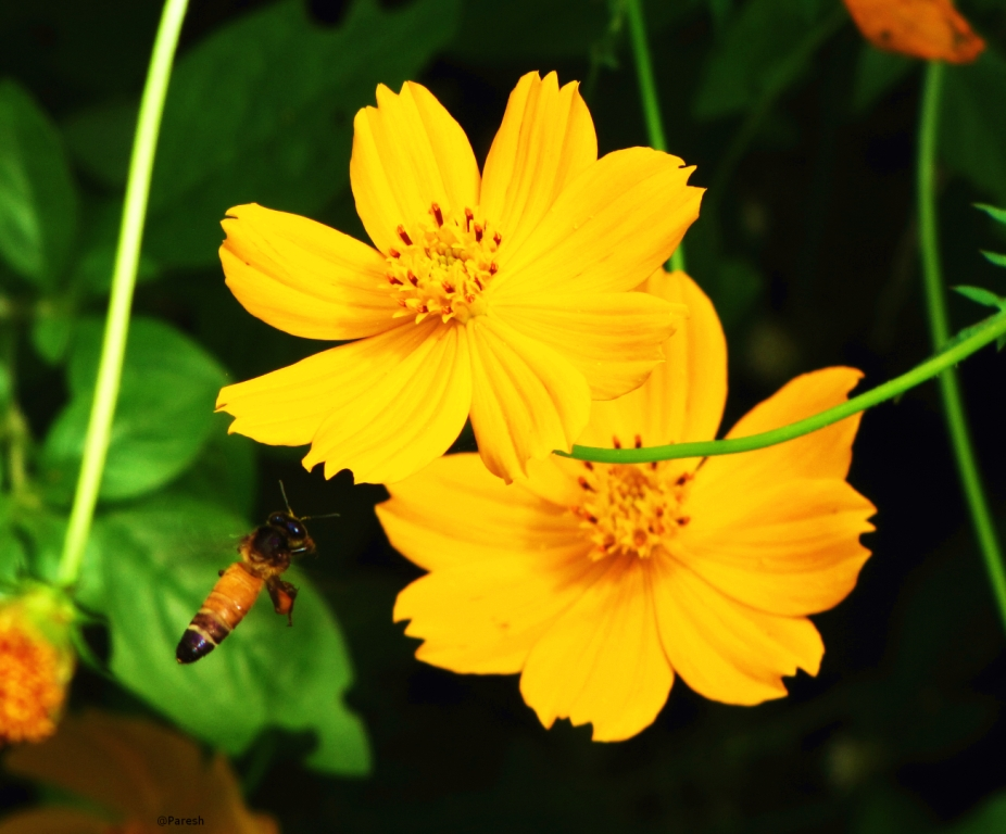 honey bees and flowers relationship quiz