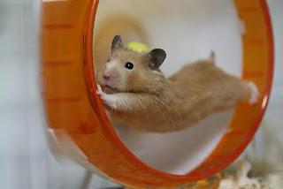 jaula hamster rueda