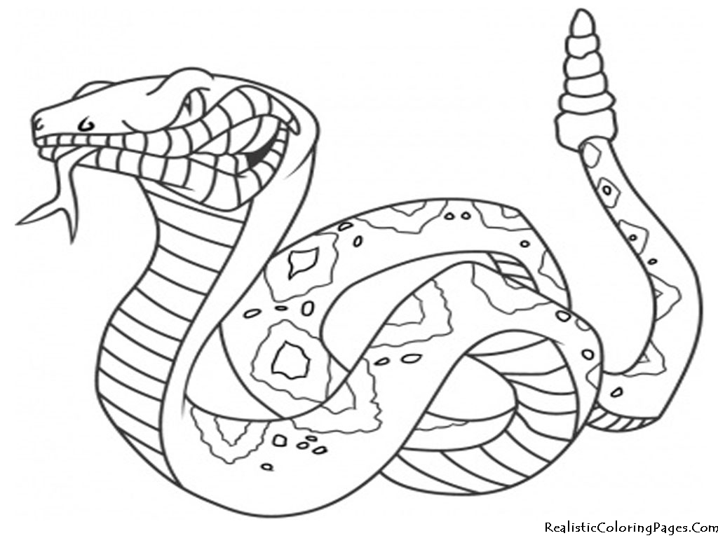 Realistic Coloring Pages Of Snakes