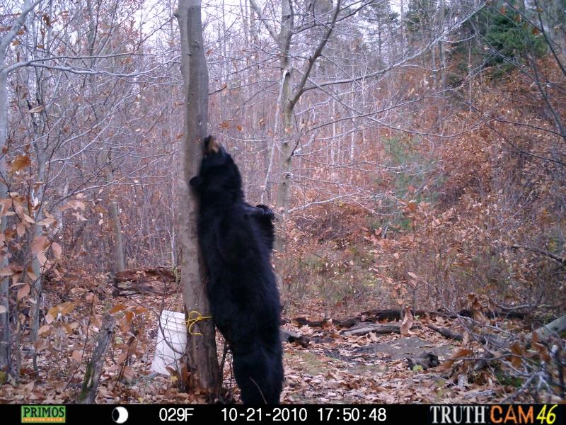 The Bigfoot Bear Paradox In Illinois The Crypto Crew