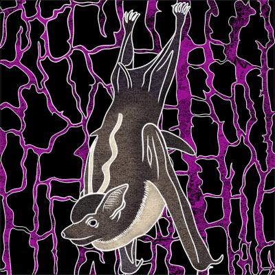 Las bacterias de los murciélagos de saco (Saccopteryx) y su éxito reproductivo
