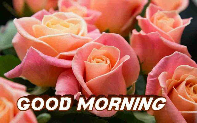 Beautiful good morning with pink rose flowers bouquet