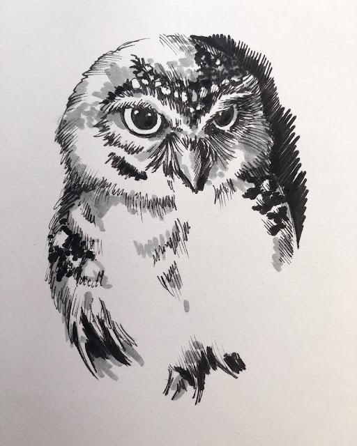 Chez Maximka, drawings of owls