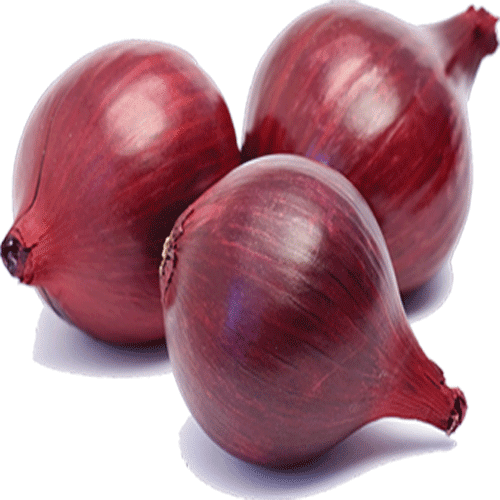 Best all time vegetable Onions - Trading, Reselling, Wholesale Business Idea - Nashik Red Onions