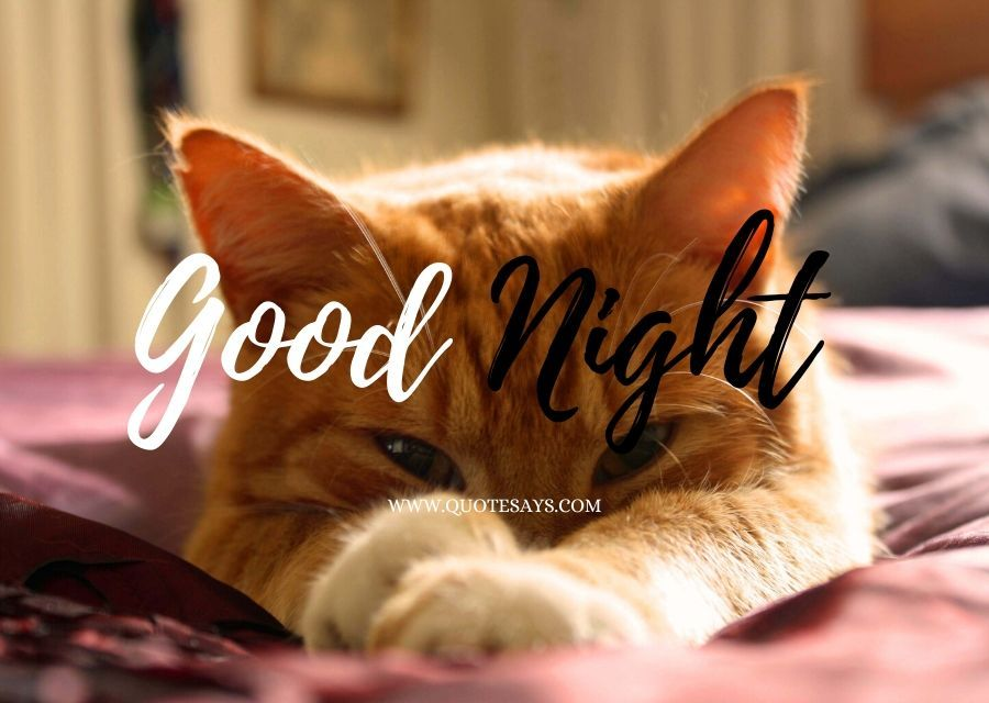 Good Night Cute Brown Cat