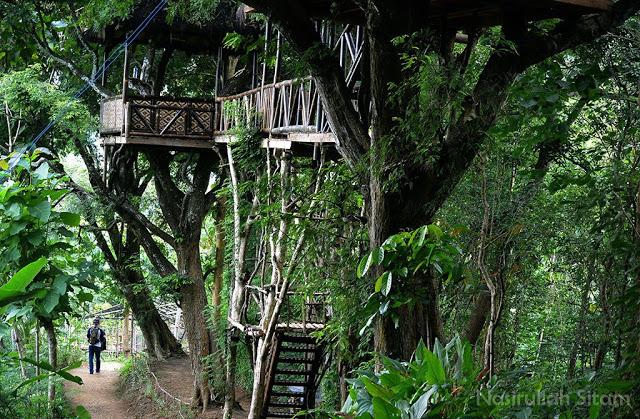 Rumah Pohon di area Punthuk Setumbu Magelang