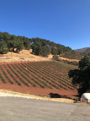 Old Zinfandel vines at Repris Wines
