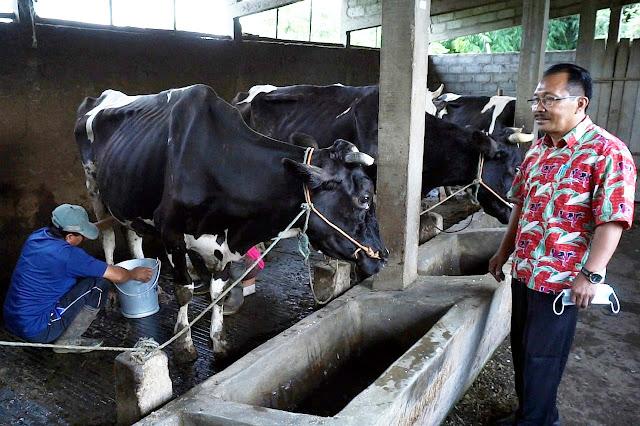Standar Kualitas Terlalu Tinggi, Peternak Kewalahan Penuhi Permintaan Pabrik Susu