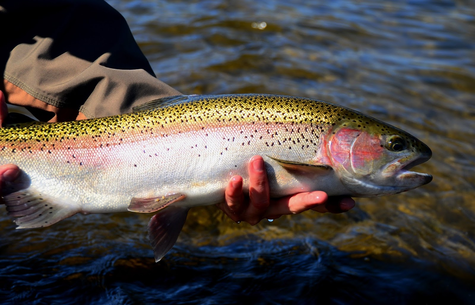 Fly Fishing Specialties