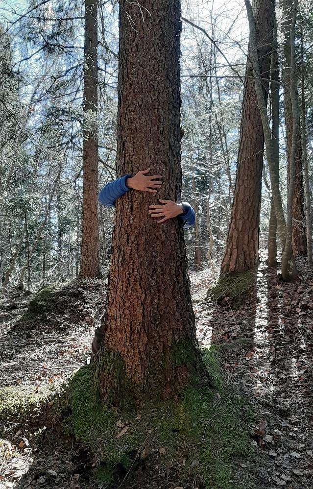 bagno di foresta in trentino