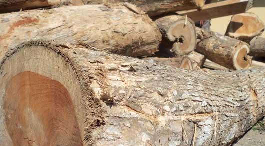 kayu jati mas