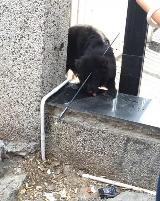 Kepala Dipanah Manusia Kejam, Anjing Rayu Simpati