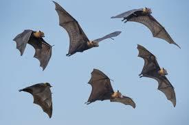 Morcegos na mira do Centro de Zoonoses