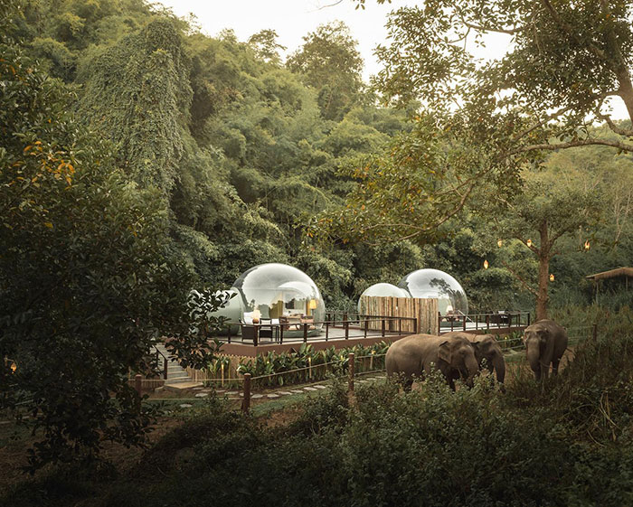 Transparent Bubble Rooms  with Stunning Jungle View