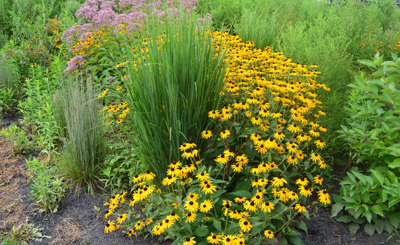 How to Design a Rain Garden
