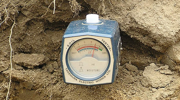 Soil tests can help diagnose soil imbalances and lacking nutrients