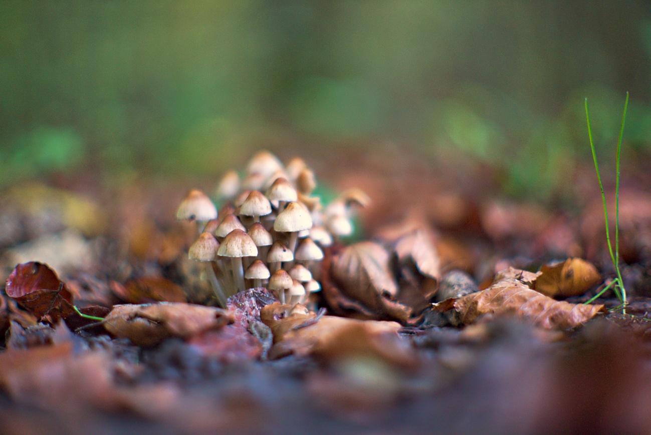 Zum Tagesabschluss — Dicht gedrängte Pilze