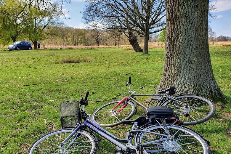 騎腳踏車去 Richmond Park 野餐