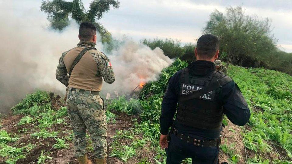 Ejército localizan casi 100 toneladas de mariguana en Mazatlán