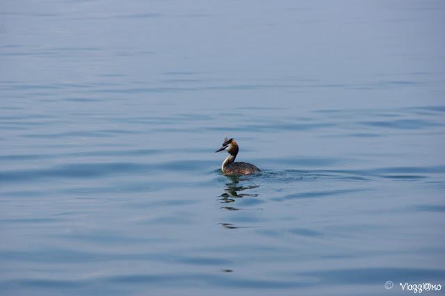 Uno degli abitanti del Lago di Garda
