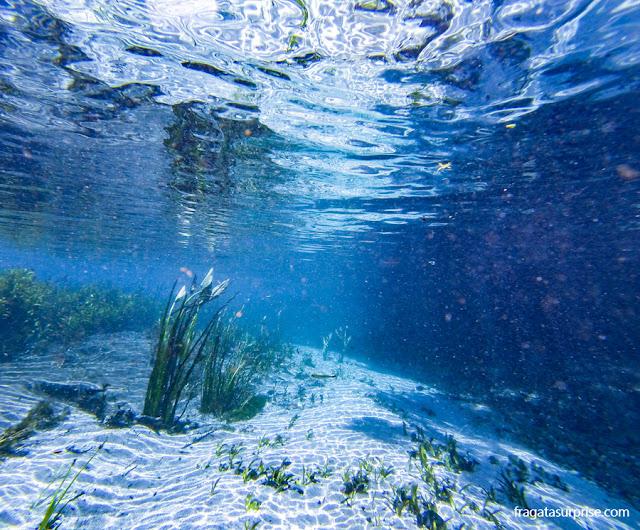 Flutuação na nascente do Rio Sucuri, Bonito