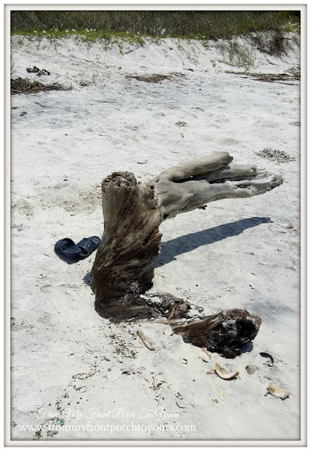 Driftwood-Cape San Blas, Florida-The Forgotten Coast- From My Front Porch To Yours